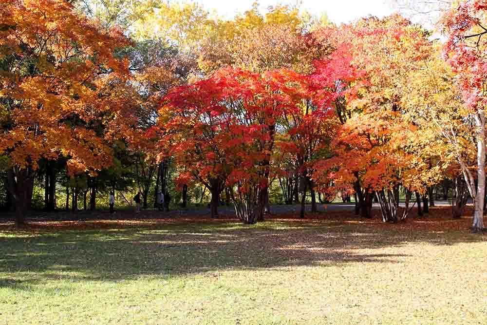 札幌真駒内公園の紅葉