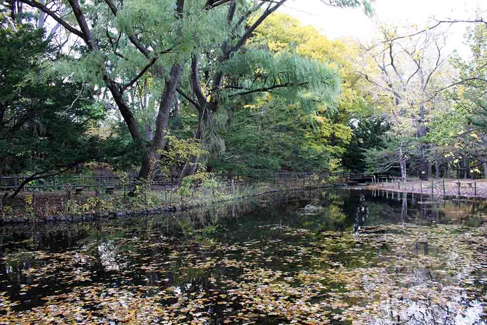 札幌円山公園の池