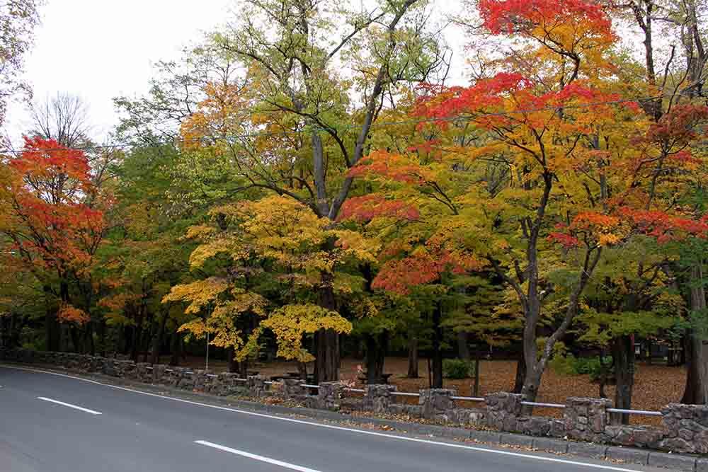 札幌円山公園の紅葉