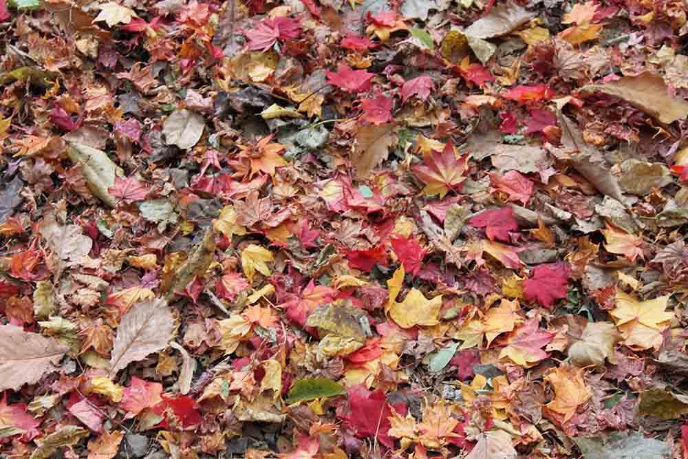 札幌円山公園の落葉