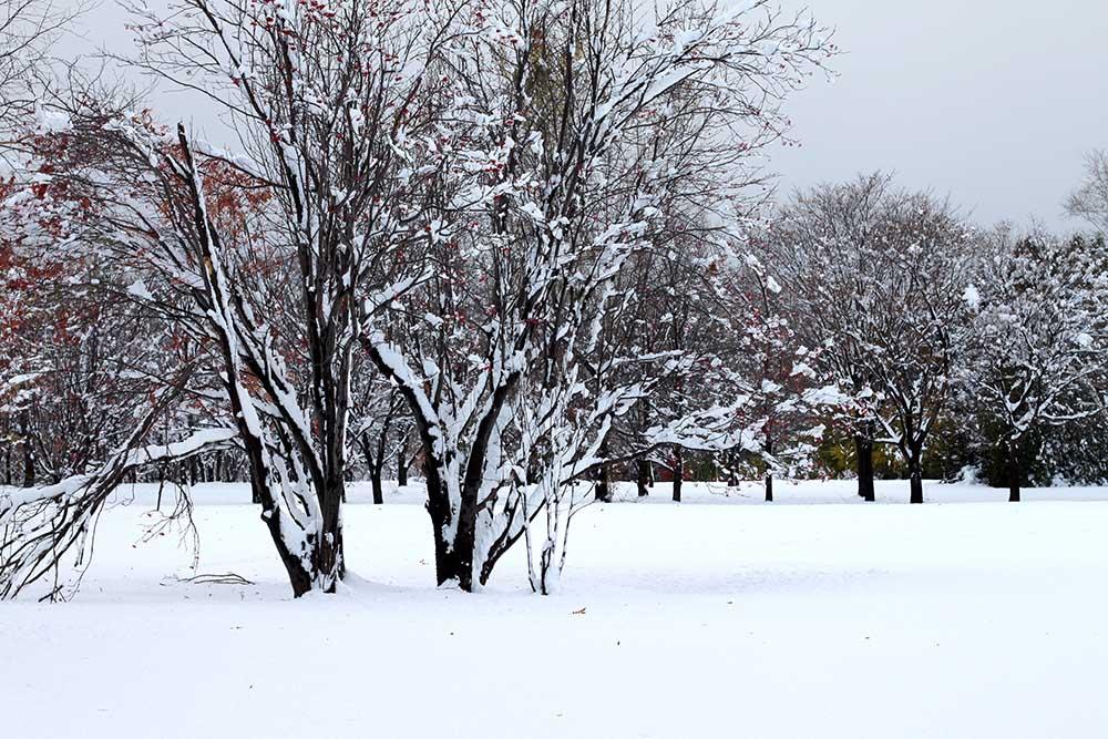 冬の札幌・真駒内公園