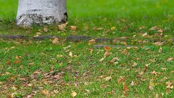 9月の札幌:落葉がはじまる季節