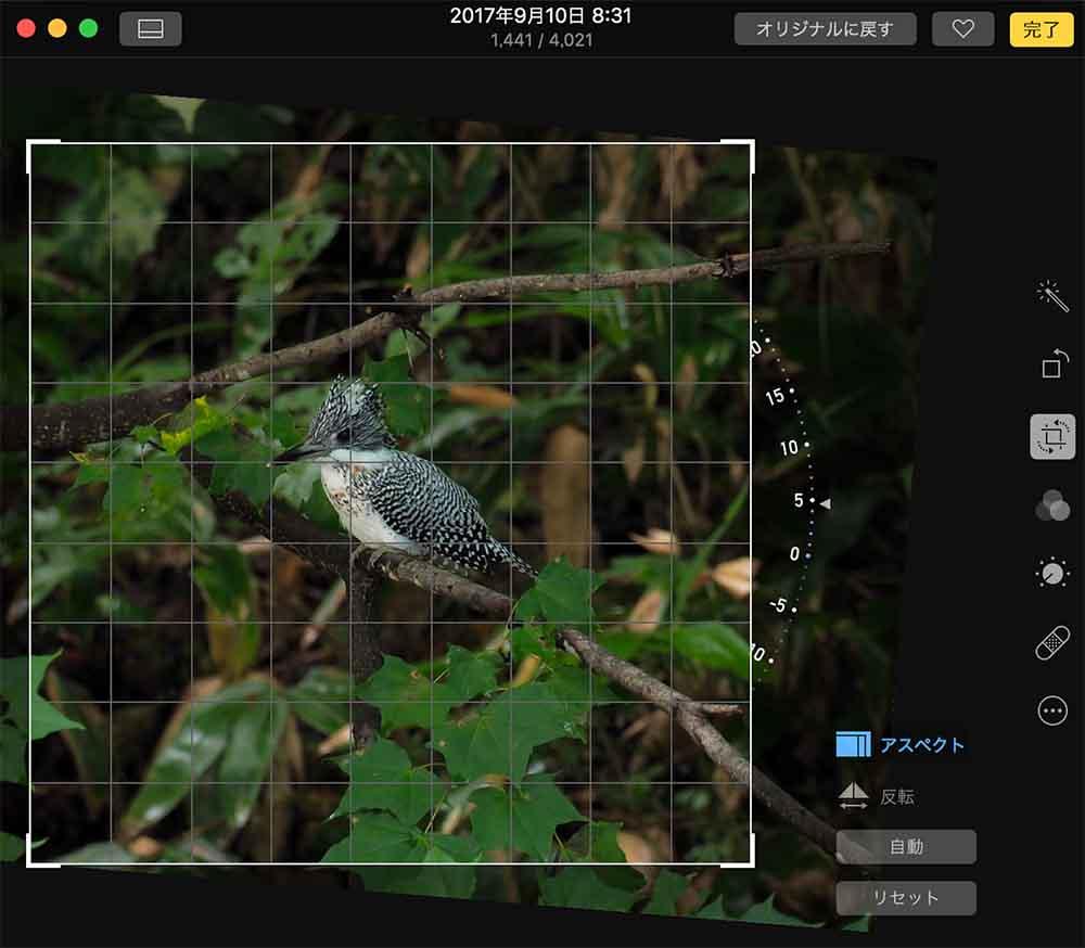 写真アプリで角度修正作業
