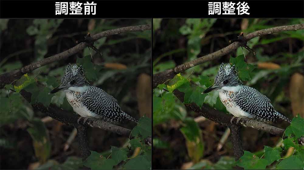 野鳥写真の画像処理