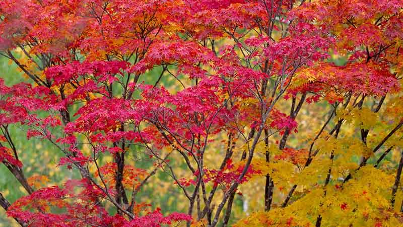 札幌の紅葉10月