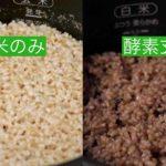 酵素玄米比較