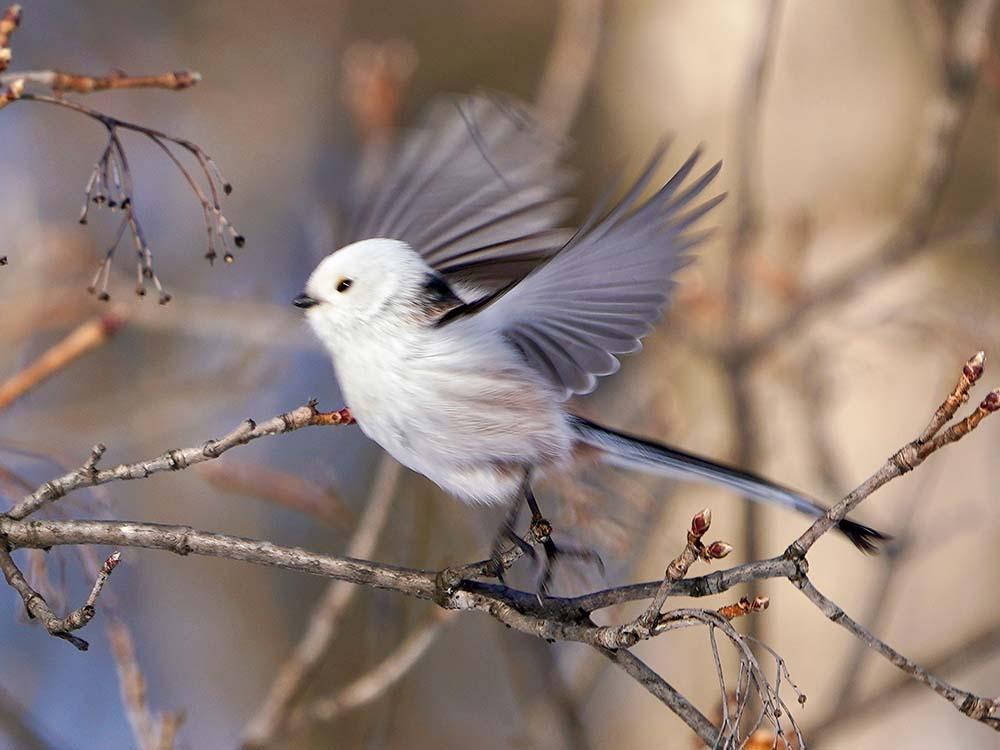 野鳥の被写体ブレ写真