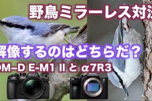 【野鳥撮影】ミラーレス一眼対決/解像力編【SONY α7RIIIとオリンパスOM D E M1 MarkII】