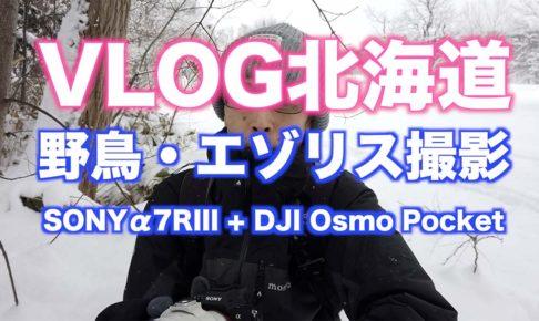 【北海道の野鳥とエゾリス】α7RIIIとDJI Osmo Pocket 【VLOG撮影】#003