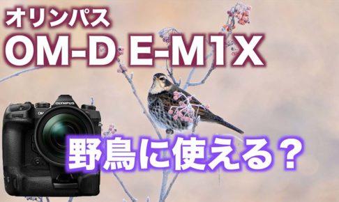 【OM-D E-M1X】野鳥撮影カメラとしてどうか?【E-M1 MarkIIとの比較】