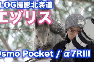 【北海道】吹雪のエゾリス撮影/α7RIIIとDJI Osmo Pocket 【VLOG撮影】#009