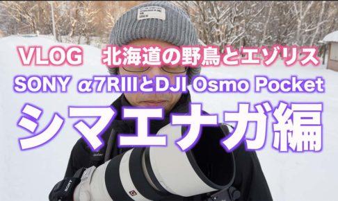【北海道の野鳥とエゾリス】シマエナガ編/α7RIIIとDJI Osmo Pocket 【VLOG撮影】#005