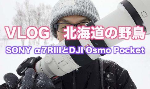 【北海道の野鳥】カメラの雪対策/α7RIIIとDJI Osmo Pocket 【VLOG撮影】