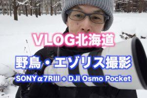 【北海道の野鳥とエゾリス】α7RIIIとDJI Osmo Pocket 【VLOG撮影】