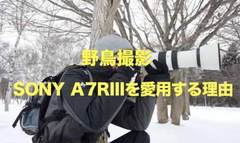 野鳥撮影youtube解説