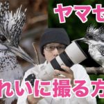 【野鳥撮影】ヤマセミをキレイに撮る3つのコツ・方法【SONY α7RIII】