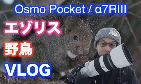 【北海道】エゾリス・野鳥撮影/α7RIIIとDJI Osmo Pocket 【VLOG#010】