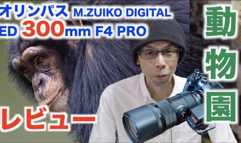 【動物園撮影レビュー】オリンパスM.ZUIKO DIGITAL ED300mm F4.0 PRO【超望遠レンズ】
