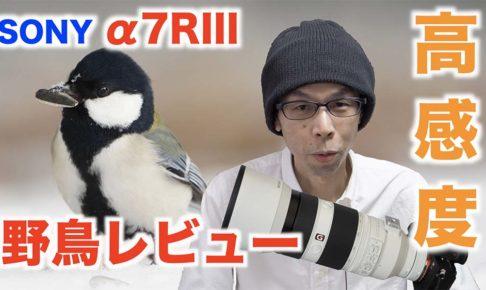 【野鳥撮影レビュー】SONY α7RIIIの高感度ノイズ